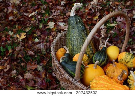 Basket Filled With Ornamental Gourds Among Autumn Hawthorn Leaves