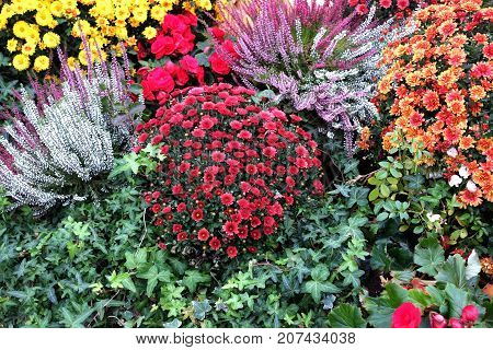 Still life  with lot of beautiful colorful flower bushes in the garden closeup