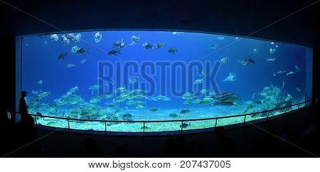 The Grand Aquarium At The Marine Museum