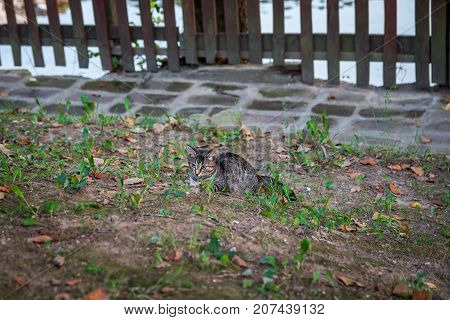 Cat sitting in the garden in front of wooden fence