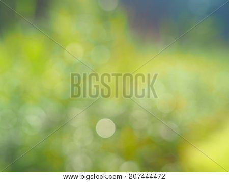 Natural bokeh background on a sunny day background out of focus blurred texture