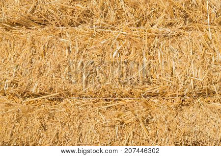 Dry yellow straw in the sheaf as a background