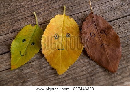 Three colorful autumn leaves with different emotions - glad indifferent sad on the old wooden background