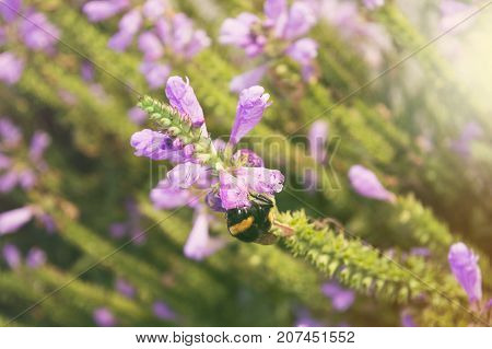bumblebee and beautiful flower in natural environment ecological concept flower background