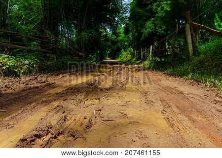 dirt and muddy rural road during a jungle trip through bamboo forest in village at countryside after the rain.