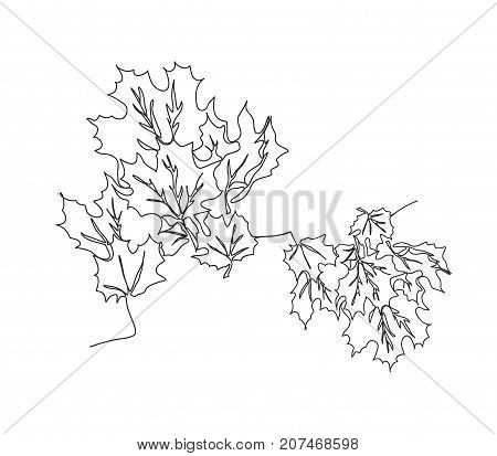 Autumn background with maple leaves. Continuous line drawing. Vector illustration