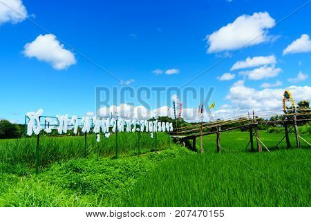 Beautiful Rural Bamboo Bridge Across The Rice Paddy Fields With Blue Sky And Fluffy Cloud In Sunny D