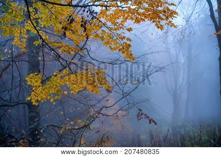 Fantasy landscape of the mysterious foggy autumn forest