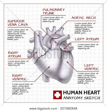 Medical science background with human heart anatomy on paper sheet in sketch style isolated vector illustration