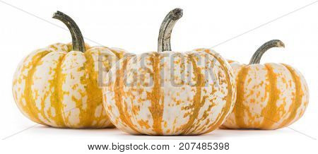 Three striped yellow pumpkins isolated on white background, Halloween concept