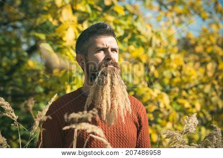 Hipster Or Bearded Guy In Autumn Nature Outdoor.