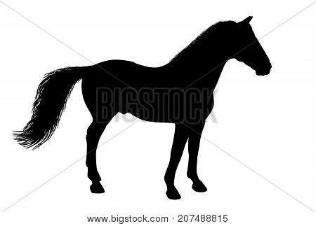 Silhouette of a standing horse. There is a variant in a vector.
