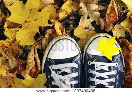 Blue sneakers on a yellow fallen maple leaves background.Autumn,Fall season,Season change concept.Copy space.Selective focus.