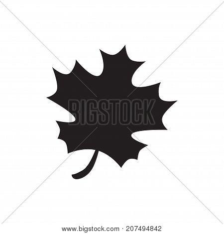 Acer Leaf Icon