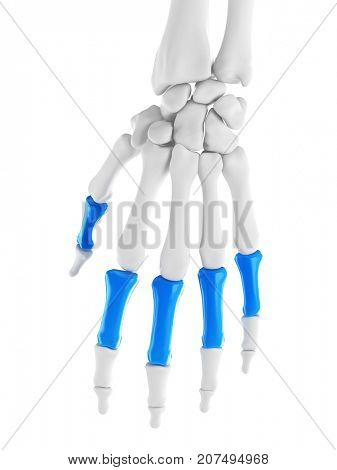 3d rendered medically accurate illustration of the proximal phalanges