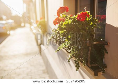Beautiful well-kept balcony with red flowers with warm sunset on street. Walking around the European city street. Walk down the street. Beautiful street. Street in the sun. Street photography