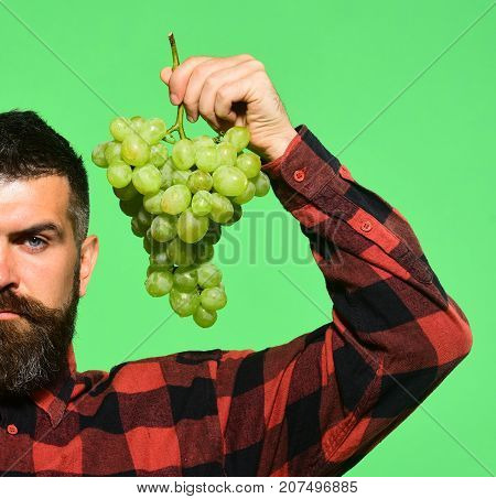 Winegrower With Serious Face Holds Cluster Of White Grapes.