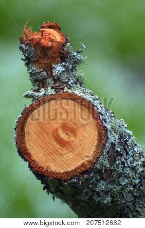 A branch cut from a tree. Nature background and texture