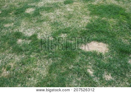 lawn in bad condition and need maintain care
