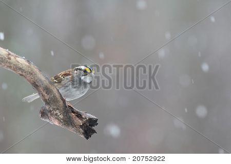 little bird in snowstorm