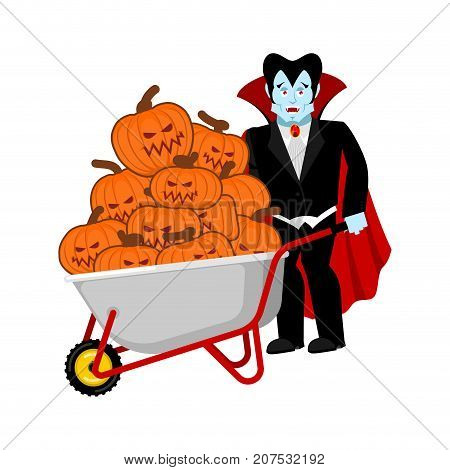 Halloween Wheelbarrow And Vampire Dracula. Bunch Of Terrible Pumpkins. Vintage Pumpkin. Vector Illus