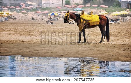 Brown horse with yellow saddle standing at the beach of Casablanca, Morocco. Reflexion in the Mediterranean sea. Blurred people resting at the background.