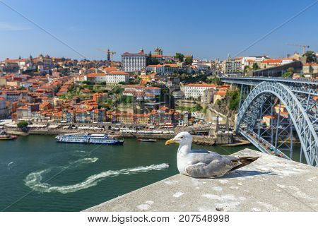 Seagull looking at city of Porto skyline. Freedom and travel concept. Aerial view of iconic Dom Luis I Bridge on Douro River with boats and Ribeira waterfront, Unesco World Heritage Site.