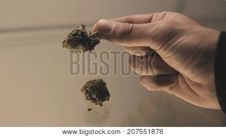 weed buds in mans hands close-up weed culture