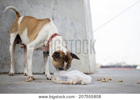 A stray dog is eating bones in plastic bags. Morning sunshine. Selective focus.