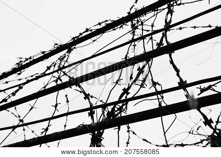 Wired fence with rolled barbed wires on white background.