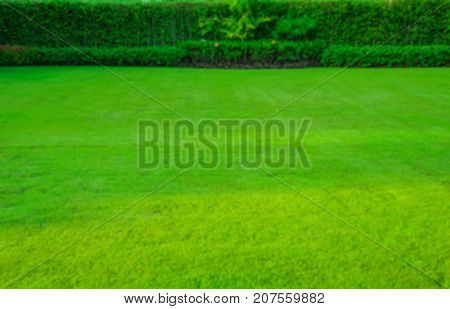 Blurred Green lawn, the front lawn for background, garden landscape design
