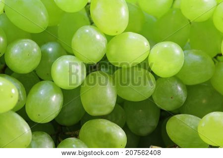 Background of grapes of sultana close up