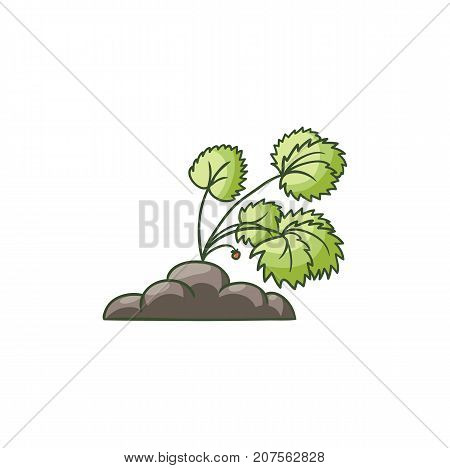 Garden strawberry plant with green leaves and red berries growing in the ground, flat cartoon vector illustration isolated on white background. Garden strawberry bush growing in the ground