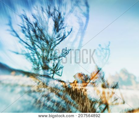 Creative natural background. Abstract image of autumn nature. Multiple exposure.