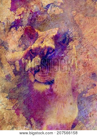 Beautiful lioness and graphic effect. Computer collage