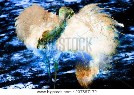 Emu ostrich bird with beautiful white feathers on graphic background