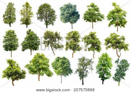 Collection Of Trees Isolated On White Background Tropical Trees Isolated Used For Design Advertising And Architecture.