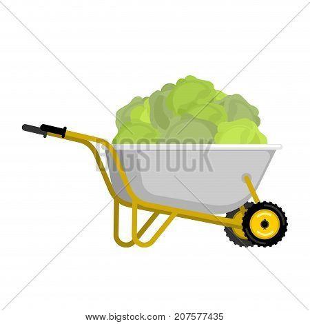 Wheelbarrow And Cabbage. Vegetables In Garden Trolley. Big Harvest Vector Illustration