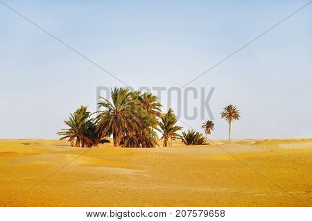Sunset in Sahara desert. Beautiful landscape with snad dunes and palm trees in oasis. Tunisia.