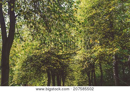 Lined Up Tree Gallery With Tall And Thick Vegetation