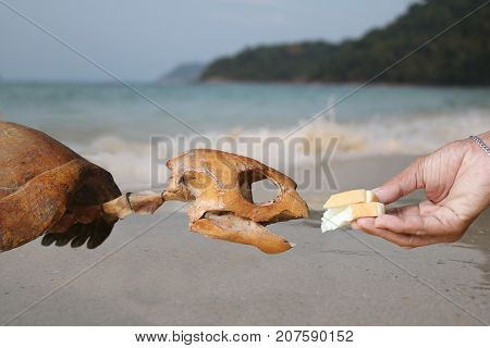 Do not feed the marine life conservation concept.Hand feeding bread to the skeleton sea turtles.