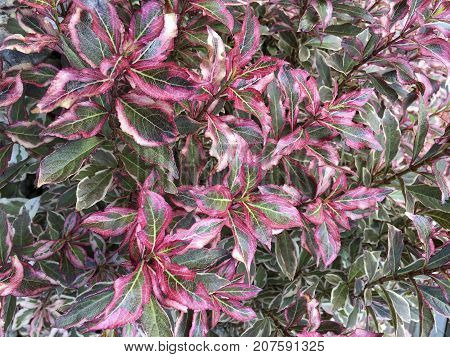 Detailed recording of a violet green spindle herb very colorful