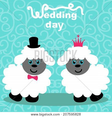 Lambs. Bride And Groom.