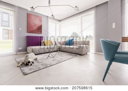 Dog In A House Interior