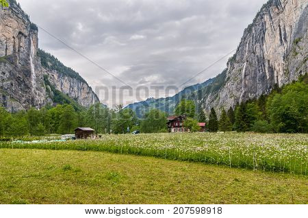 Lauterbrunnen Switzerland - May 26 2016: The traditional chalet on green field & meadow flowers in overcast spring day in Lauterbrunnen Valley and Swiss Alps Switzerland.