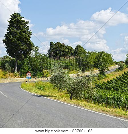 Road Surrounded by Vineyards and Olive Groves