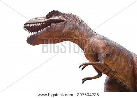 Tyrannosaurus Rex Is Fighting . Isolated Background