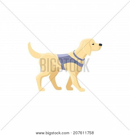 Guide dog, specially trained seeing eye for a blind person, flat cartoon vector illustration isolated on white background. Flat cartoon Labrador guide dog for blind people