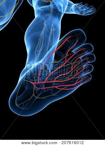 3d rendered medically accurate illustration of the Plantar Nerve