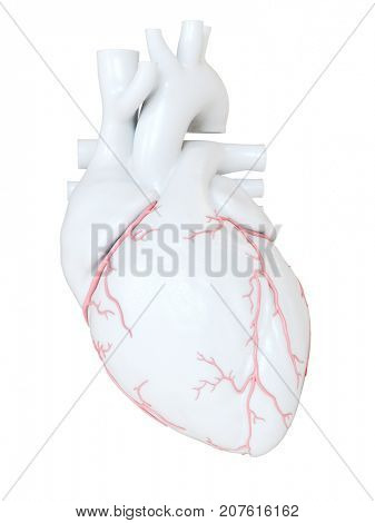 3d rendered medically accurate illustration of the coronary arteries